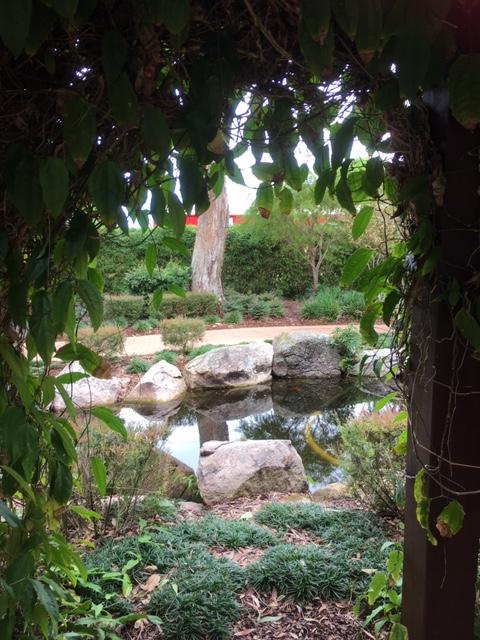 HB garden 3.JPG
