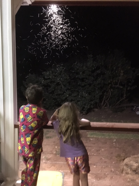 kids fireflies.JPG